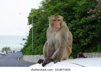 Monkey in tourist attractions in Thailand
