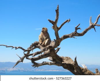 Monkey at the tree