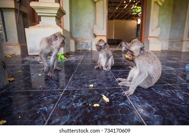 Monkey. Tropical animals. Exotic Travel Tourism. The rest of the equator. Bali Indonesia