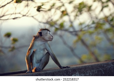 Monkey turned away ignoring the people and pretending that offended