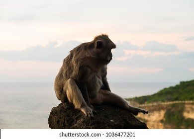 Monkey at Uluwatu temple, in the sunset - Bali Indonesia