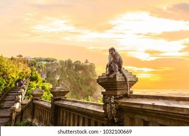 The monkey at Uluwatu Temple at sunset, Kuta South, Bali, Indonesia