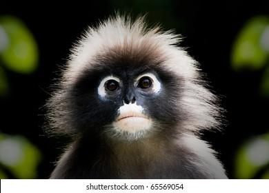 Monkey very lonely