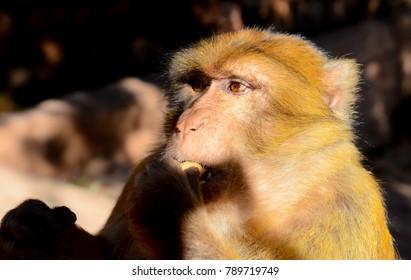 Monkey in warerfall Ozoud