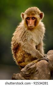 Monkey watching on a tree stump