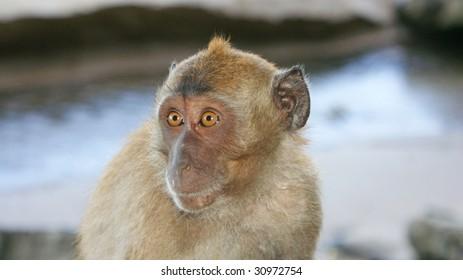 Monkey wide eyes