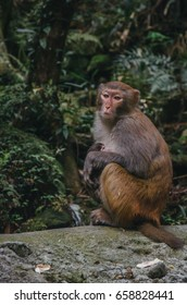 Monkey at Zhangjiajie National Forest Park