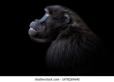 Monkey in a Zoo with black Background