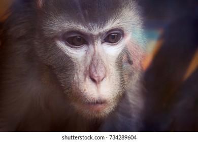 A monkey in a zoo sad