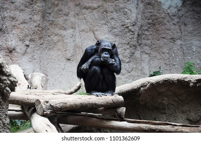 monkey in the zoo sits on a tree
