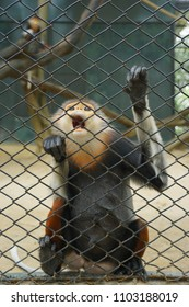 A monkey in the zoo's cage