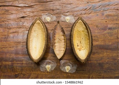 Monkey-comb (Pithecoctenium crucigerum) pod and seeds on wooden floor - Misiones province, Argentina