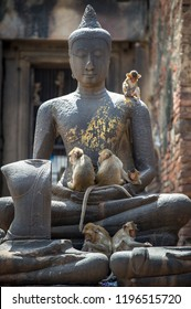 Monkeys with Buddha statue