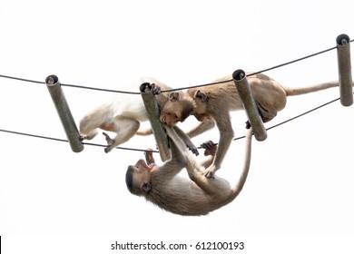 monkeys cute