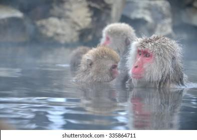monkeys enjoying hot spring
