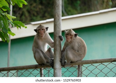 Monkeys in a fishing village outside Pattaya