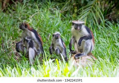 monkeys in green grass in forest