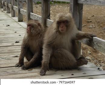 Monkeys hanging out on a bridge in Nagano, Japan