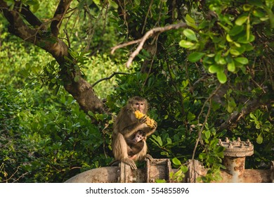 Monkeys lives in a natural forest in Thailand
