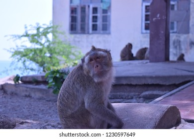 The monkeys are looking backwards. Blue color.