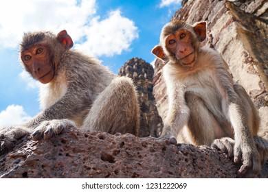 Monkeys in Lopburi