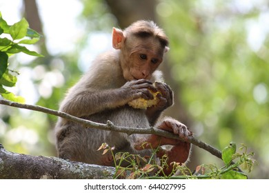 monkey's lunch time
