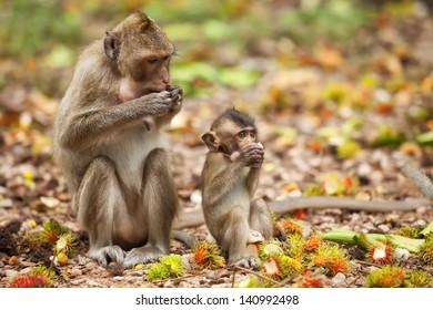 Monkeys in the mangroves in Phetchaburi Province.