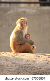 monkeys - mom and the baby.