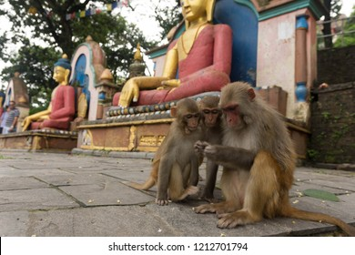 Monkeys at the Money Temple in Katmandu, Nepal.