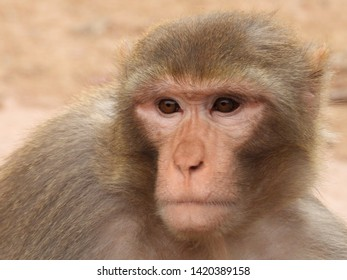 Monkeys In Nature (Close Up)