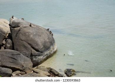 Monkeys on the rocks Then jump into the sea. At Hua Hin Beach, Thailand.