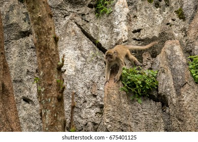 Monkeys on tree, jungle thailand