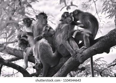 Monkeys on tree sitting full family