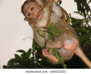 Monkeys are really agile. This small monkey is flying attached to a slim branch.
