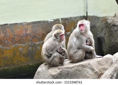 monkeys relaxing in a zoo