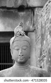 Monkeys in the ruin temple, Loburi, Thailand