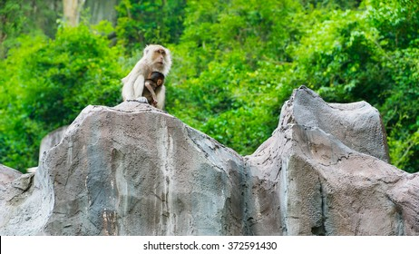 Monkeys sitting on The Cliff, Abstract of Purity of Love between Mom & baby monkey.