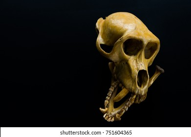 Monkey's skull That's still perfect with black background
