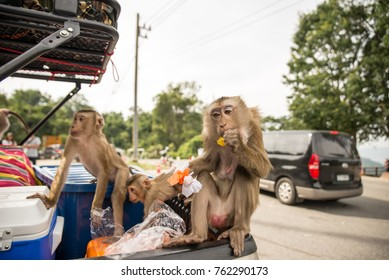 The monkeys are stealing food that tourists forget behind the car.