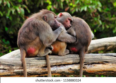 monkeys together in zoo