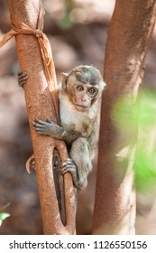 Monkeys in tropical forests Southern Thailand
