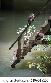 Monkeys wants to swim from wooden bridge