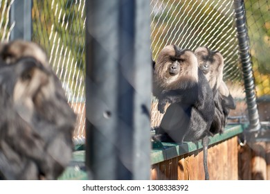 Monkeys in the Zoo on a sunny day