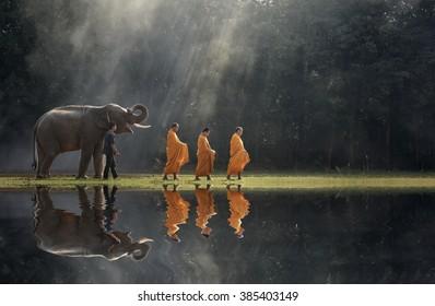 Monks buddhism  elephant thailand.