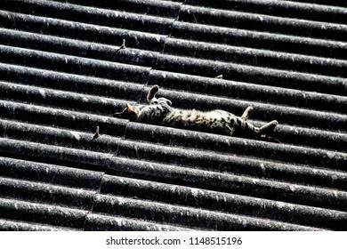 João Monlevade/Minas Gerais/Brazil - Abr 26 2014: Cat sun bathing