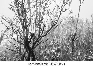 Monochromatic bare branches of trees woodland in the winter