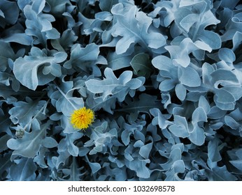Monochromatic blue plant background with contrast yellow flower