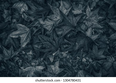 Monochromatic image of japanese maple autumnal dry leaves on the ground as organic natural texture pattern