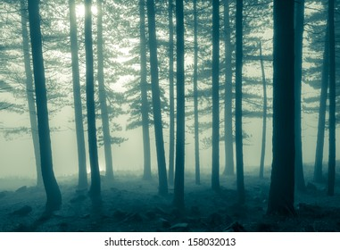 A monochromatic image of trees in the early morning fog.