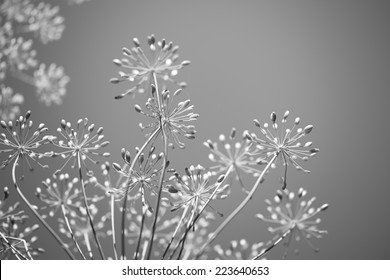 Monochrome black and white floral background for spring
